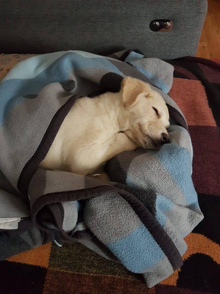 BLANKA – ca. 5 Monate