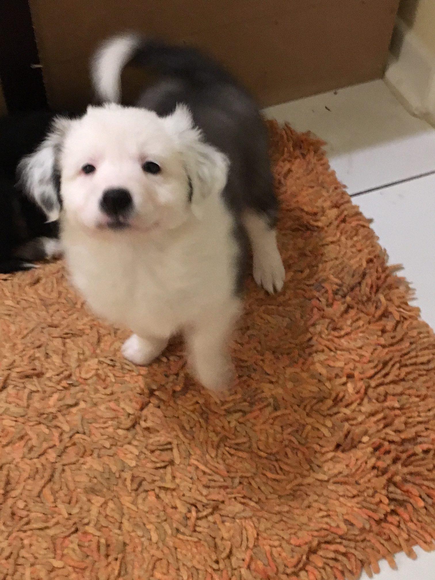 YUKON – ca. 2 Monate