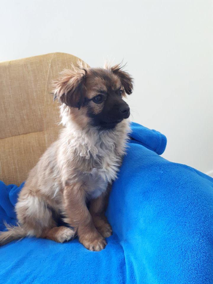 TIBBY – ca. 3 Monate