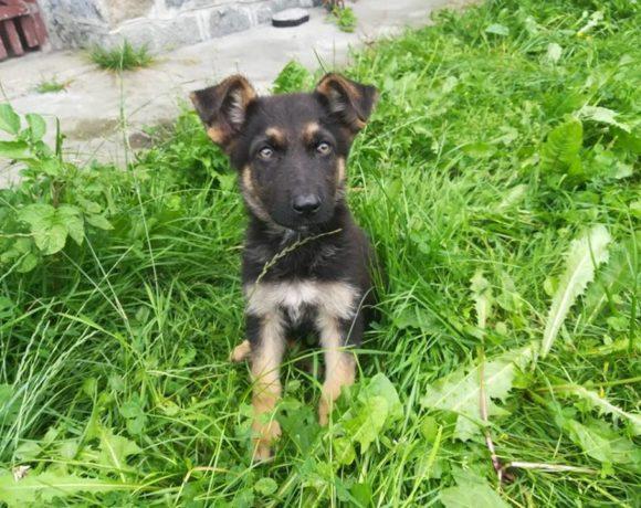ELSA – ca. 4 Monate