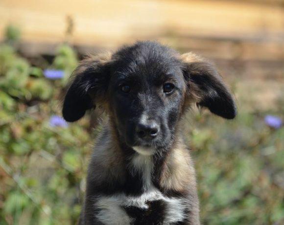 ALEX(ANDRA) – ca. 3 Monate