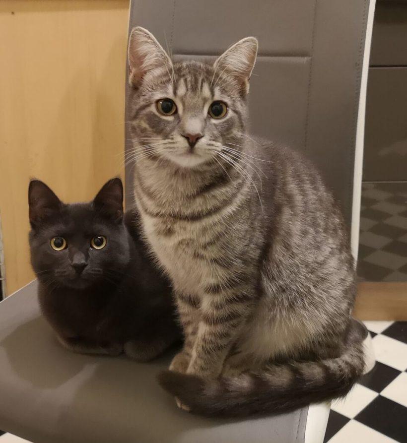 NAOMI und AURORA – ca. 8 Monate