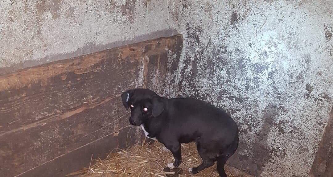 Endlich konnten wir fast alle Hunde aus Braila retten…