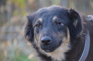 Luna, ca. 1 Jahr, ein Auge fehlt, konnte auf einen Gnadenhof reisen