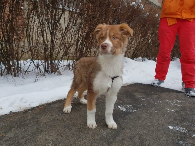 BUSTER – ca. 3,5 Monate