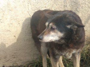 Bunicuta, ca. 14 Jahre, hat ihren Gnadneplatz gefunden