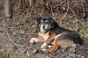 Buddy, ca. 10 Jahre, auf einem Auge blind, wurde von einem Gnadenhof übernommen