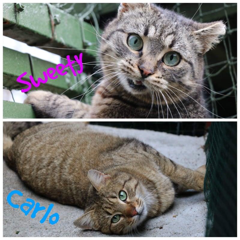CARLO&SWEETY – ca. 1,5 Jahre und ca. 2 Jahre