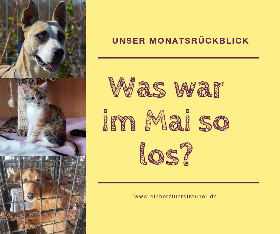 Was war im Mai so los?