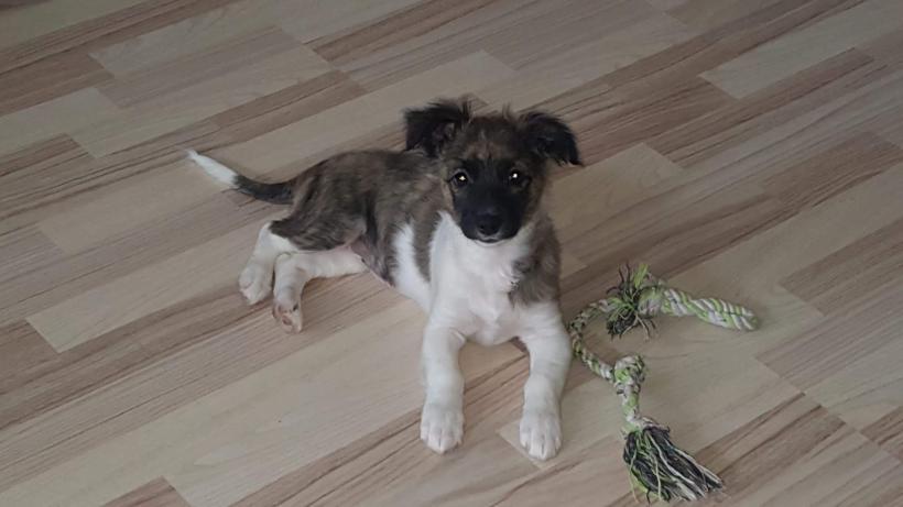 CLARA – ca. 3 Monate