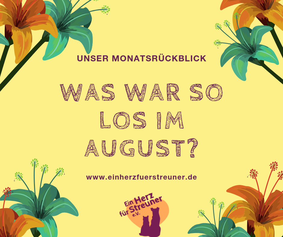 Was war im August so los?