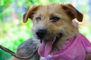 Perdita, durfte in ein deutsches Tierheim reisen