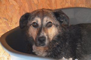 Bruno, wurde von einem Tierheim übernommen
