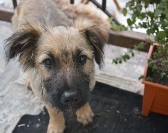 ROWA – ca. 4 – 5 Monate