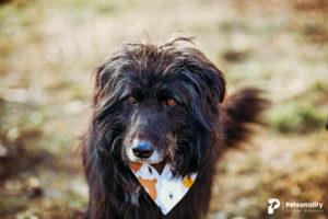 Alf, wurde von einem Tierheim übernommen