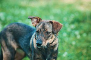 Snout, wurde von einem Tierheim übernommen