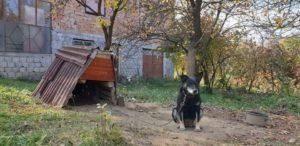 Alisha, ca. 8 Jahre, wurde von einem Gnadenhof übernommen