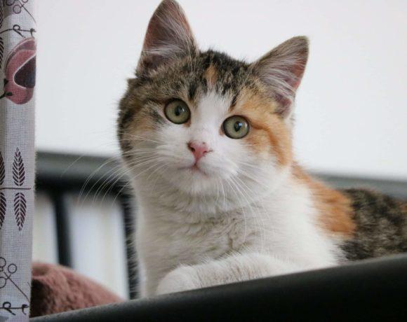 BERTA – ca. 3,5 Monate