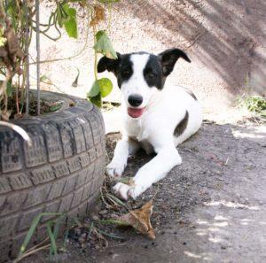 Blanca, ca. 9 Monate, wurde von einem TSV übernommen