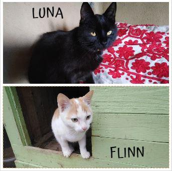 LUNA&FLINN – ca. 1,5 Jahre und 9 Monate