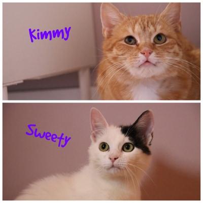 KIMMY&SWEETY – ca. 6 Jahre und 5 Monate
