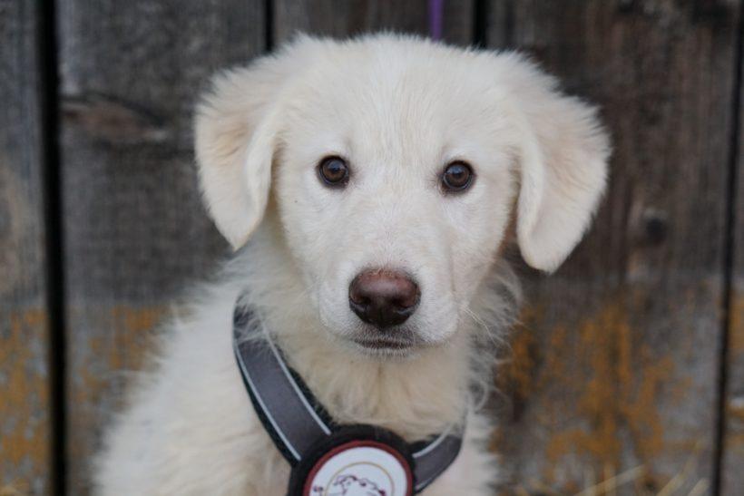 ALFIE – ca. 4 Monate