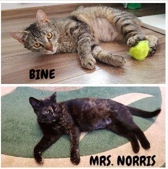 MRS. NORRIS&BINE – ca. 3 Jahre und 11 Monate