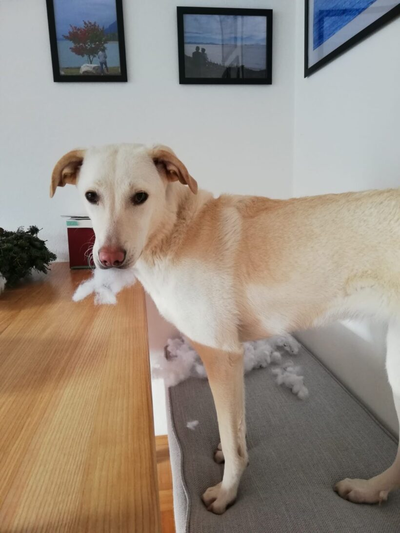 KALEY – ca. 1,5 Jahre