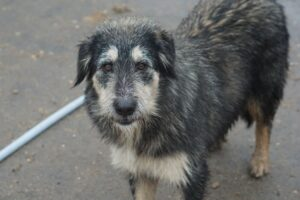 Lulu, ca. 1 Jahr, konnte von einem TSV übernommen werden