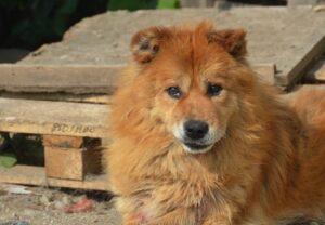 Dreibein Leo, ca. 12 Jahre, hat einen Gnadenplatz gefunden