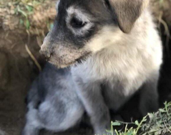 LEIA – ca. 3 Monate