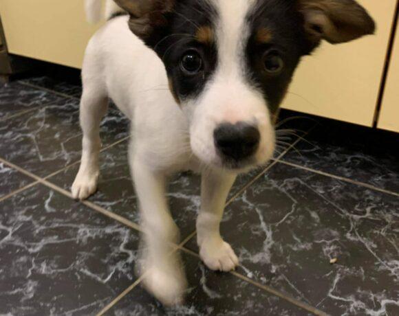 ALFIE – ca. 3 Monate