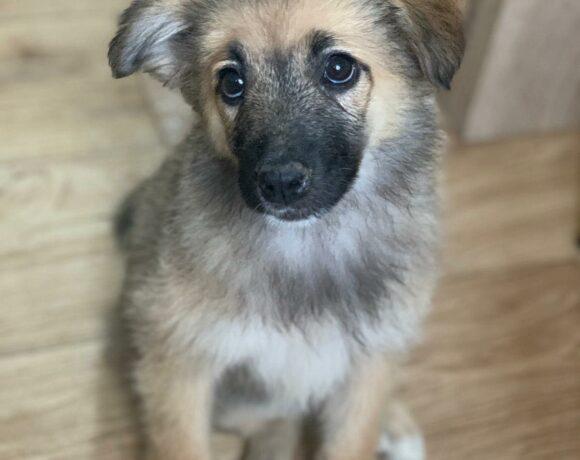 LEEZA – ca. 4 Monate