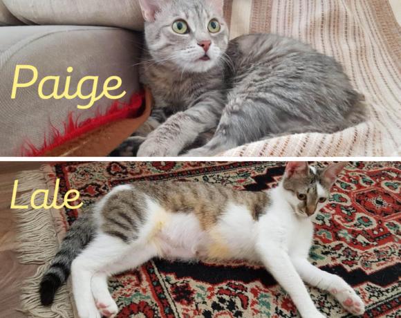 PAIGE&LALE – ca. 1 Jahr