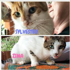 SYLVESTER&ZINA – ca. 1+3 Jahre