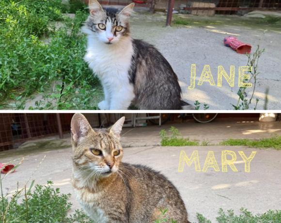 MARY&JANE – ca. 7 Jahre und 2 Jahre