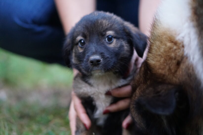 GRIZZLY – ca. 3 Monate – reserviert