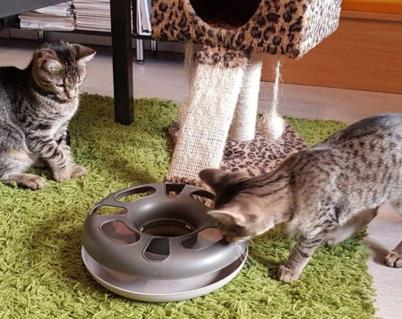 OLIVIA und IRMI – ca. 4 – 5 Monate