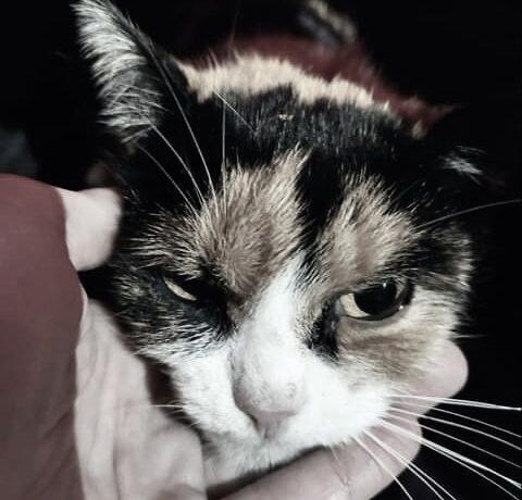 ALESSIA – FIV positiv – ca. 4 – 5 Jahre