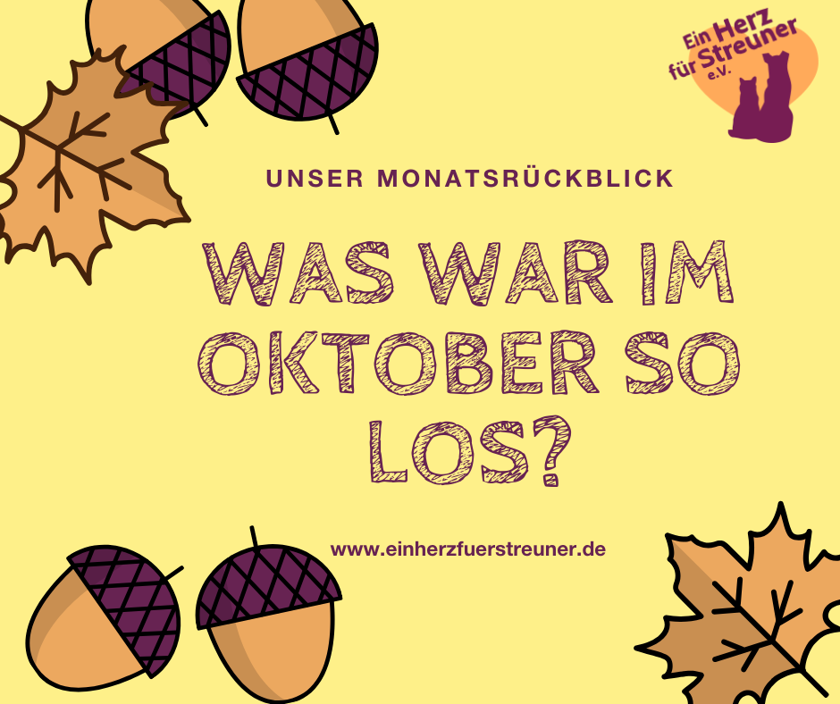 Was war im Oktober so los?