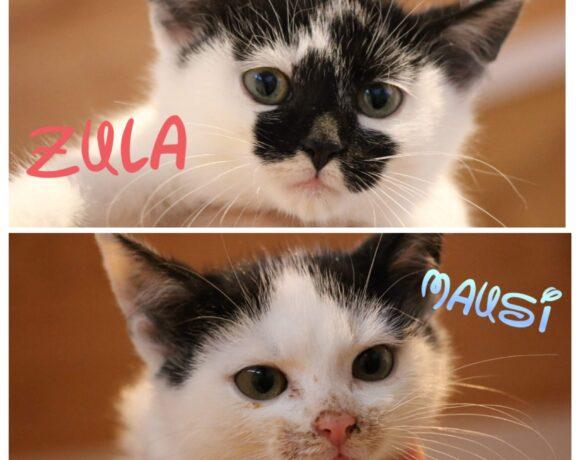 MAUSI&ZULA – ca. 2 Monate