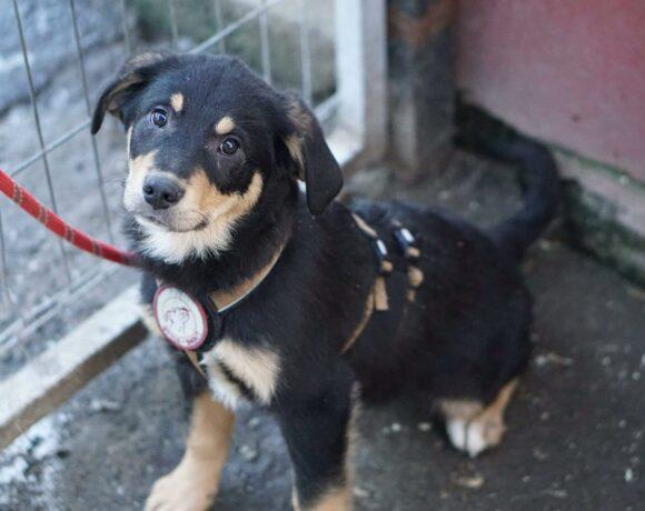 PIPPIN – ca. 3,5 Monate