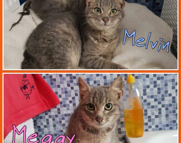 MEGGY&MELVIN – ca. 6 Monate