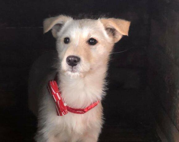 LUCY – ca. 3 Monate