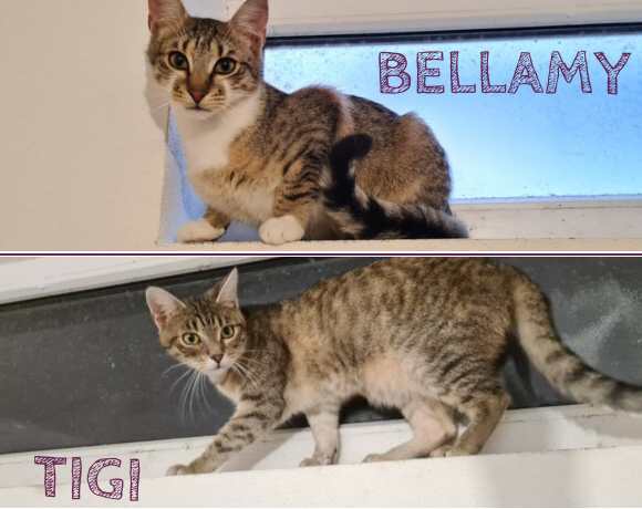 BELLAMY&TIGI – ca. 1 Jahr