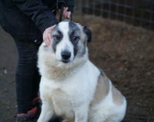 Malia, ca. 3 Jahre, wurde von einem Tierschutzverein übernommen