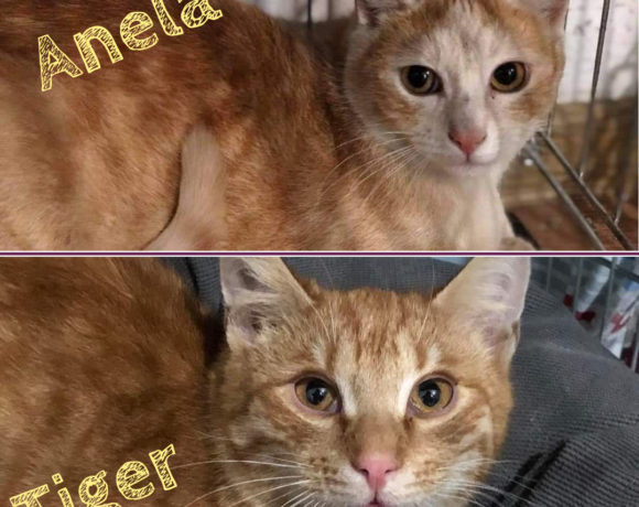 ANELA&TIGER – ca. 9 Monate und ca. 1 Jahr
