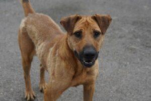 Sullivan, ca. 3 Jahre, wurde von einem Tierschutzverein übernommen
