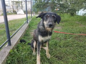 Zira, ca. 3 Jahre, wurde von einem Tierschutzverein übernommen
