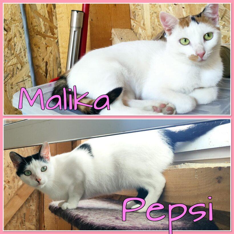 PEPSI&MALIKA – ca. 1 Jahr